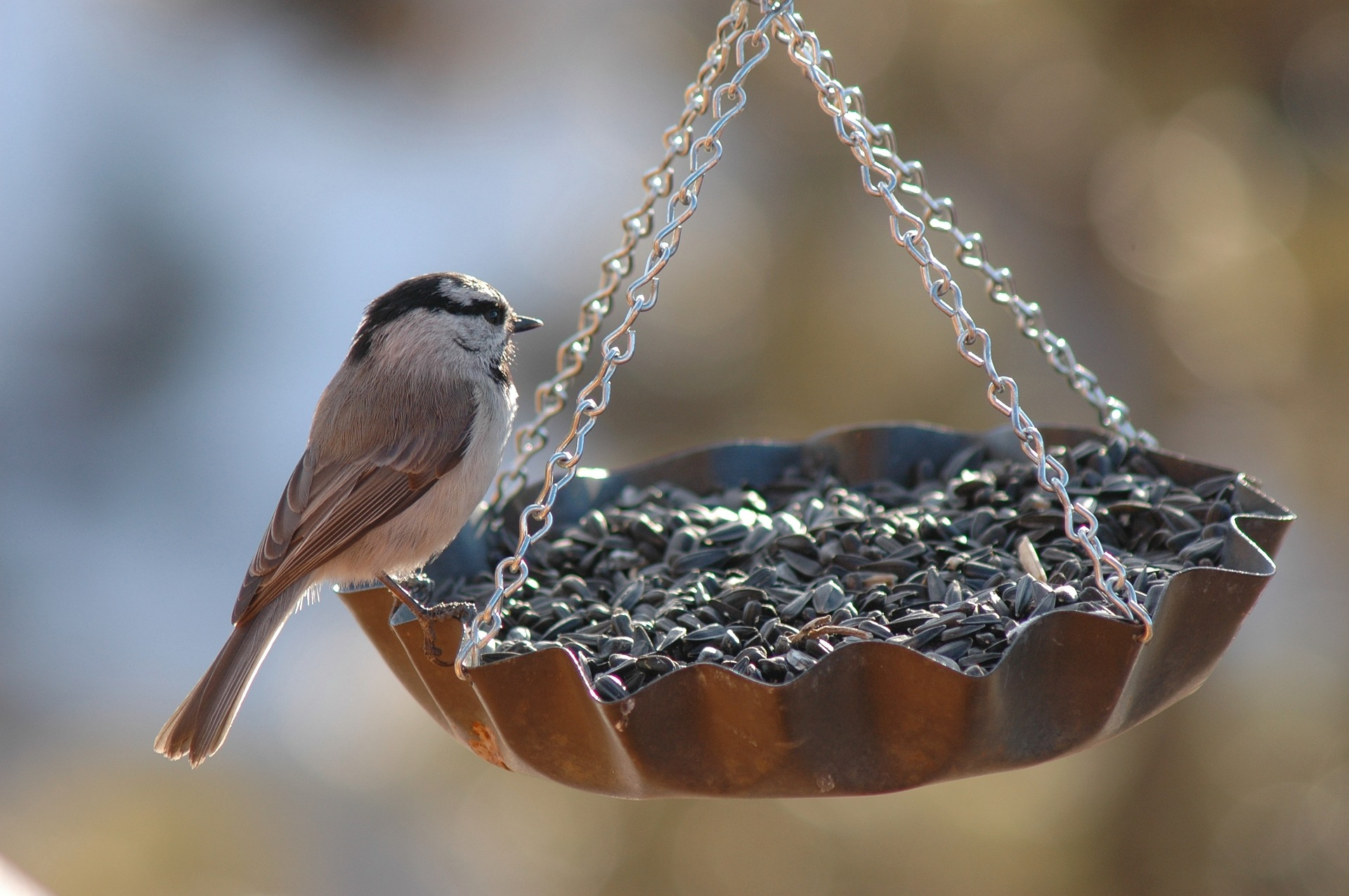 Bring A Little More Wildlife Into Your Backyard