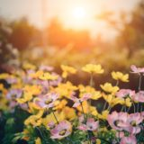 Ideas to Add Life to Your Garden