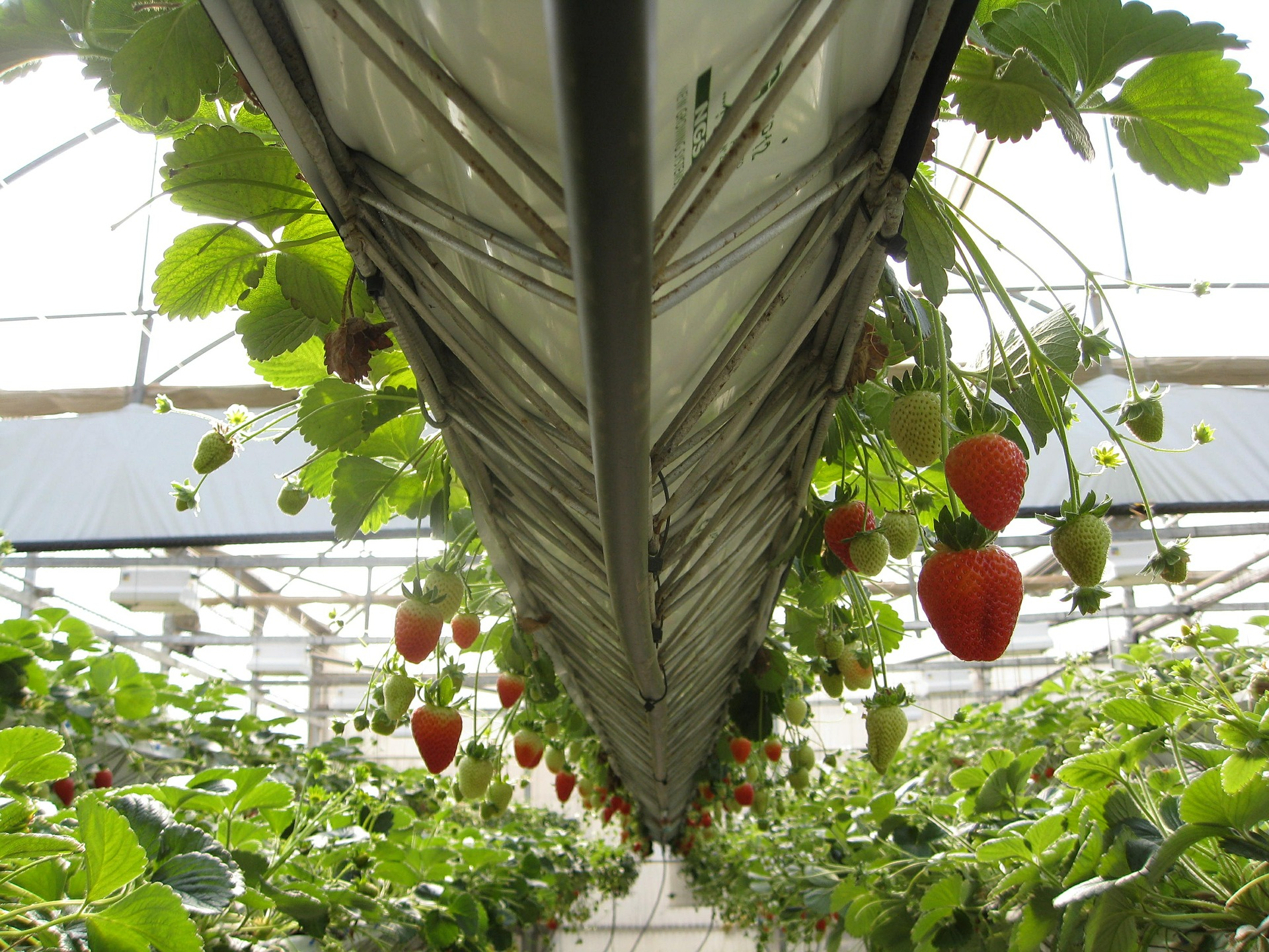 How A Small Greenhouse Can Grow Fruits In Your Garden All Year Round