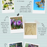 Which Flowers Should You Display At Home This Spring?