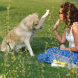 How to do attention training for dogs