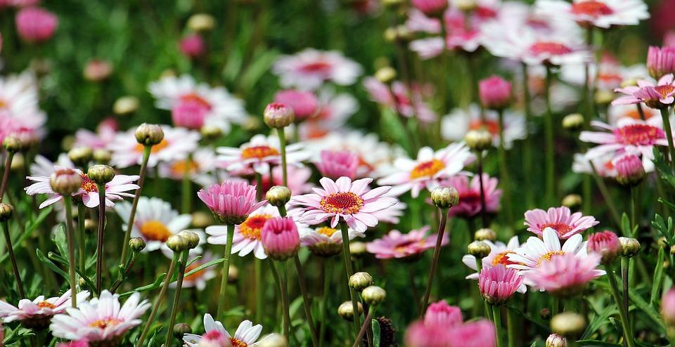 A Sensual Journey Through Garden Tranquility