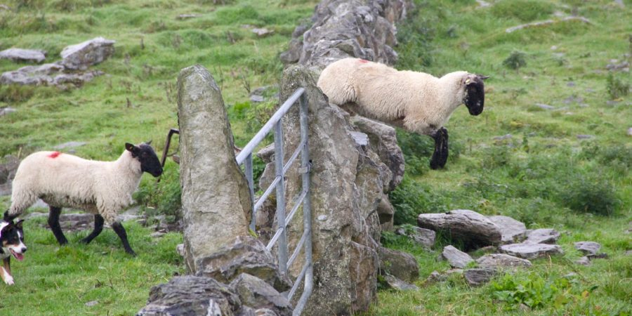 Tired Of Counting Sheep? Here's How To Really Get To Sleep