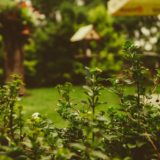 How to Make a Glorious Garden with a Yard of Any Size