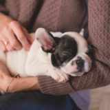 The Qualities That Will Make You A Wonderful Doggy Parent 100%