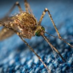 Some Common Diseases That Can Ruin Your Trip