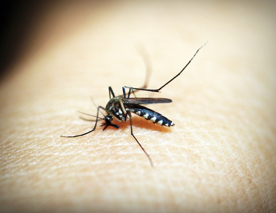 Best Tips to Prevent Malaria