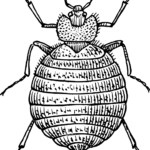 5 Questions To Ask The Bed Bug Exterminators Before You Hire Them