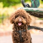Things You Should Know Before Adding A Dog To The Family