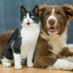 All you Need to Know About CBD and Endocannabinoid System in Pets
