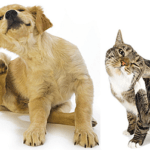 Hemp Oil for Treating Skin Issues In Pets