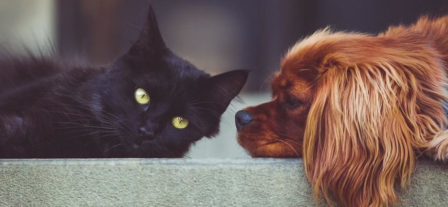 What is Dog and Cat Anxiety? How Can You Help?