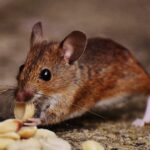 4 Most Common Reasons That People Have a Pest Infestation