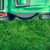 4 Common Garden Maintenance Mistakes to Avoid for Homeowners