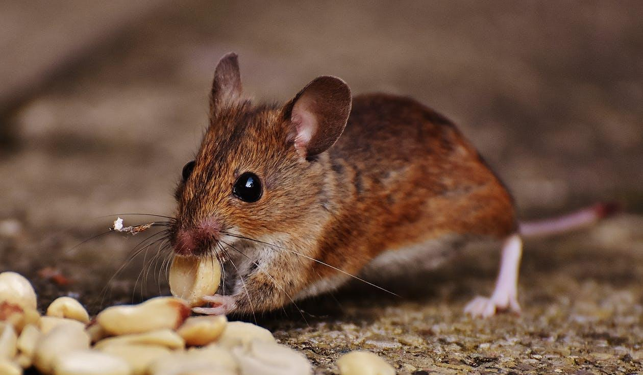 How To Keep Pests & Rodents Out Of Your Apartment