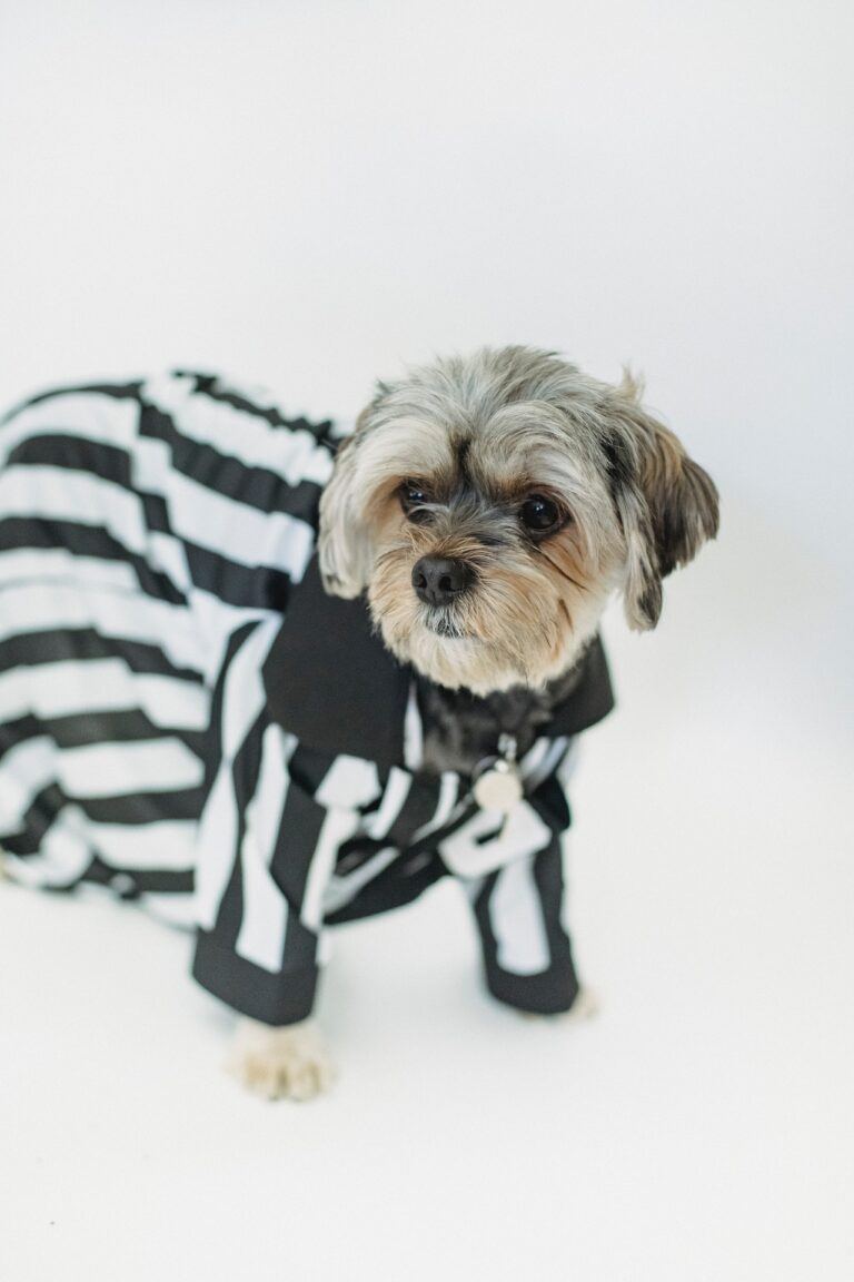 Show your Wagging Tails Some Love with Cute Pet Dresses