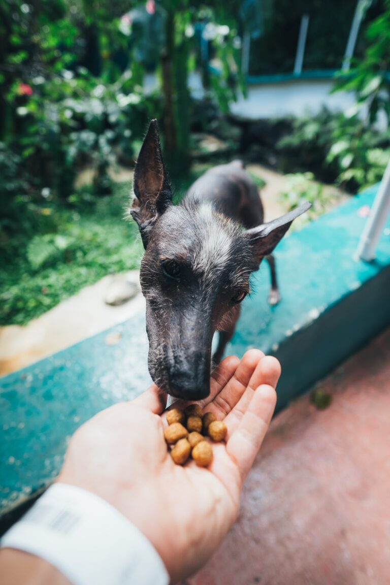 How to take care of your pet's diet and why it's important