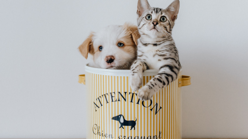 14 Ways to Keep Your Pet Healthy & Happy