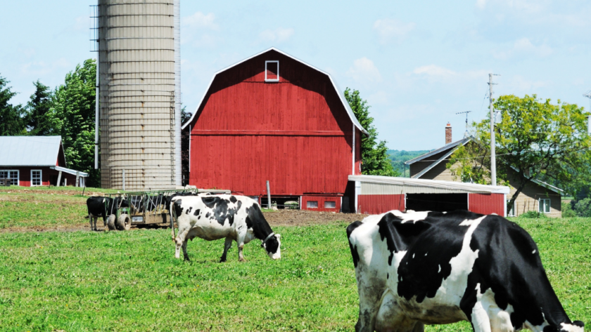 Planning to Start a Dairy Farm? Here's How You can do it